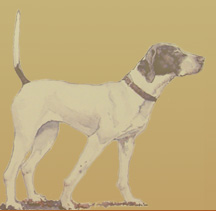 Watercolor of an Elhew Pointer